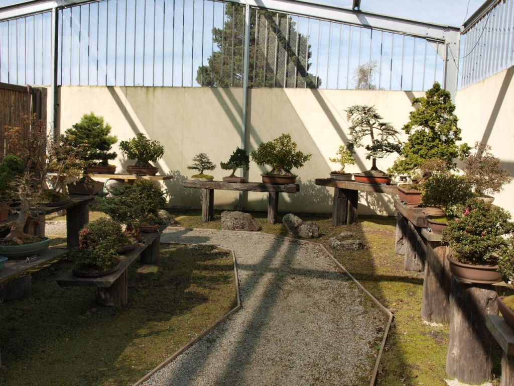 Bonsai Art Nursery