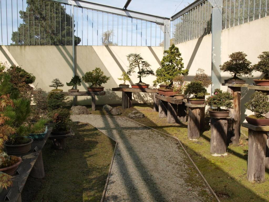 Bonsai Art Nursery